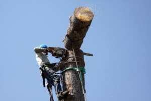 buncombe county tree worker