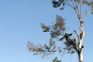 asheville nc tree company